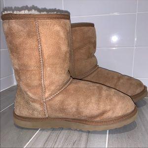 Chestnut Brown Ugg Boots